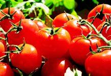 España es el líder europeo en agricultura ecológica