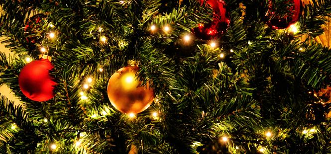 La Navidad no es una época feliz para el medio ambiente