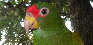 El comercio de aves silvestres ha caído alrededor del 90% a nivel mundial
