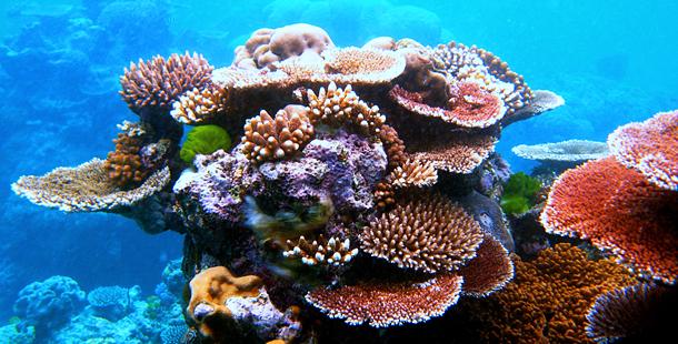 Los plásticos afectan gravemente a los corales