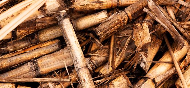 Europa quiere biomasa, pero no a cualquier precio