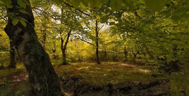Biodiversidad en los bosques - Ambientum Portal Lider Medioambiente