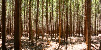 La Ley de Montes versus recalificaciones de los suelos tras un incendio forestal