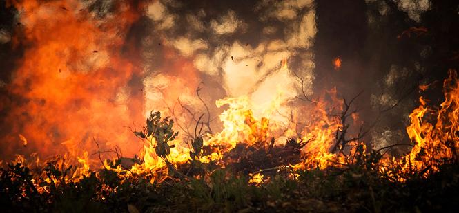 Ingenieros Forestales piden potenciar la investigación de causas de incendios forestales, cumplimiento estricto de la ley de montes y más gestión forestal