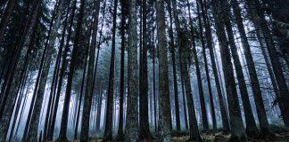 Más incendios y deforestación por culpa del cambio climático