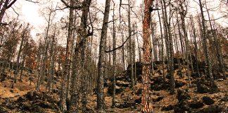 La ola de incendios en Galicia ha quemado 11.500 hectáreas