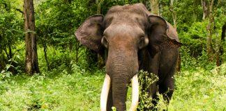 Stop tráfico de especies