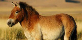 Todos los caballos salvajes del mundo se han extinguido