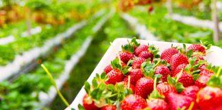 Incremento de la superficie de cultivo ecológico europeo
