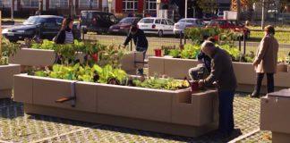 El auge de los huertos urbanos no está exento de riesgos