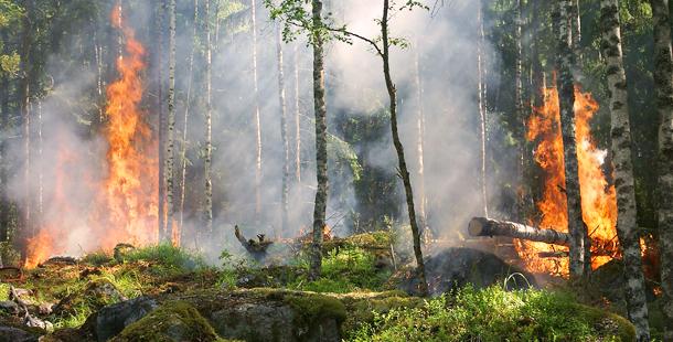 Los incendios del norte de España dañan a 13 espacios de la Red Natura 2000