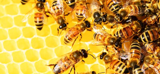 El cambio climático está poniendo en riesgo todos los beneficios que aportan las abejas