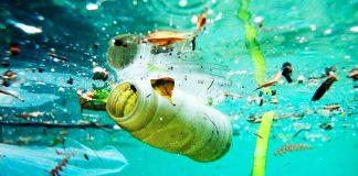 Casi tres de cada cuatro peces del Atlántico presentan microplásticos en sus estómagos