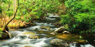 Sigue flotando DDT en los ríos españoles