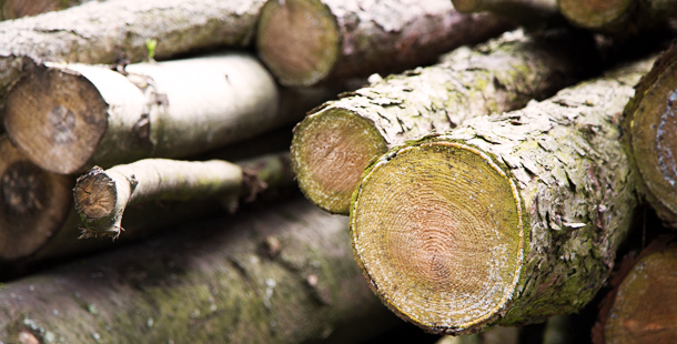 Las subastas de madera suponen más de 100 millones de euros para la economía española en 2017