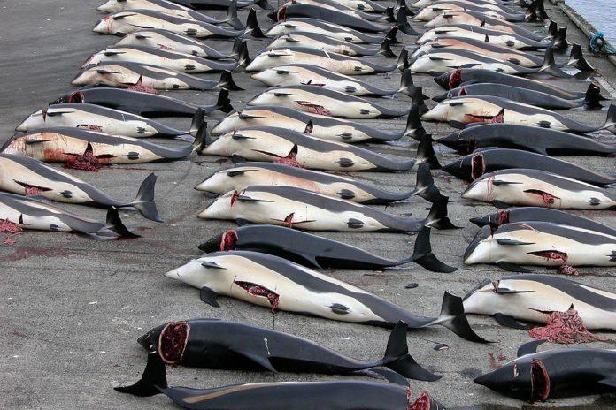 Resultado de imagen para caza comercial de ballenas japon