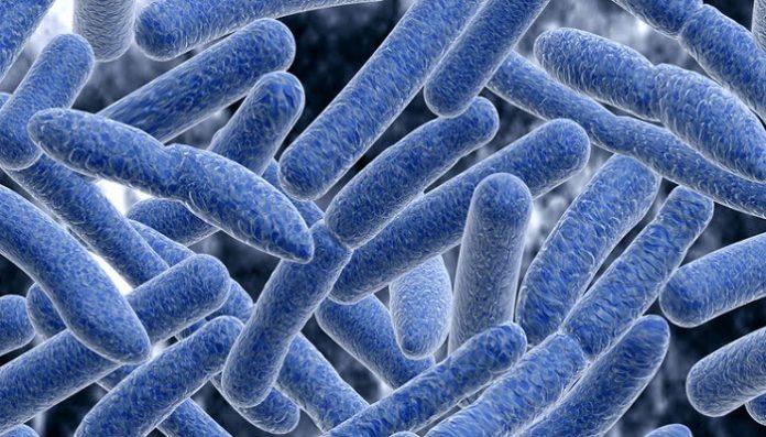 Resultado de imagen para bactria botulismo