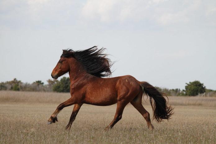 Estudio completo sobre caballos prehistóricos Ambientum
