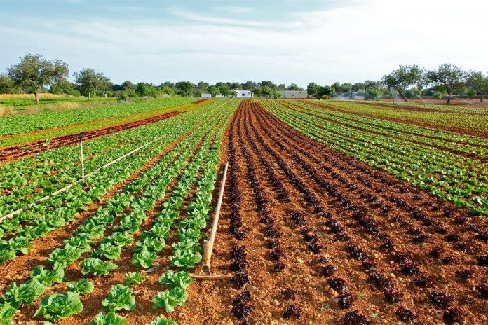 Los cultivos con más biodiversidad tienen mejor rendimiento - Ambientum