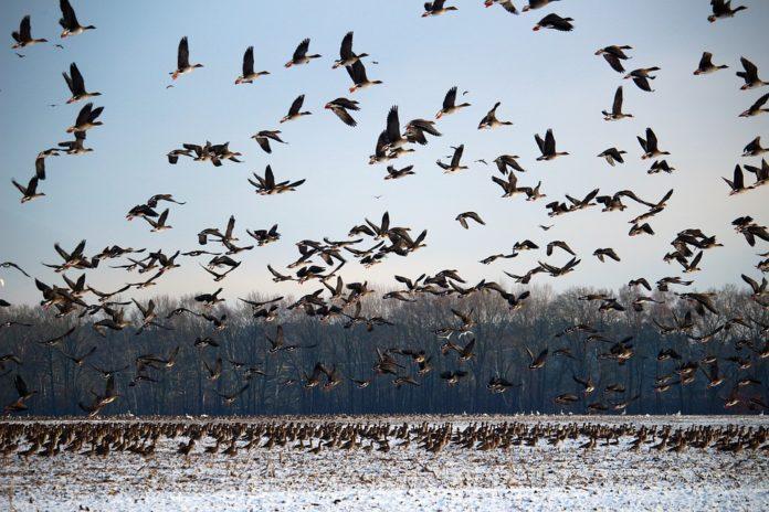 https://www.ambientum.com/wp-content/uploads/2019/12/aves-migratorias-696x464.jpg