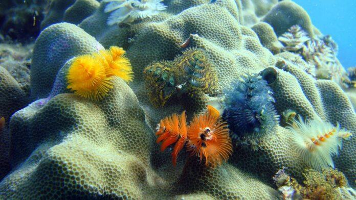 El declive de la biodiversidad marina tropical - Ambientum