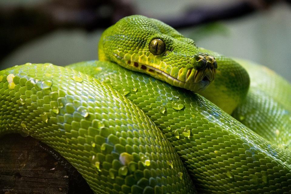 Serpiente-pixabay